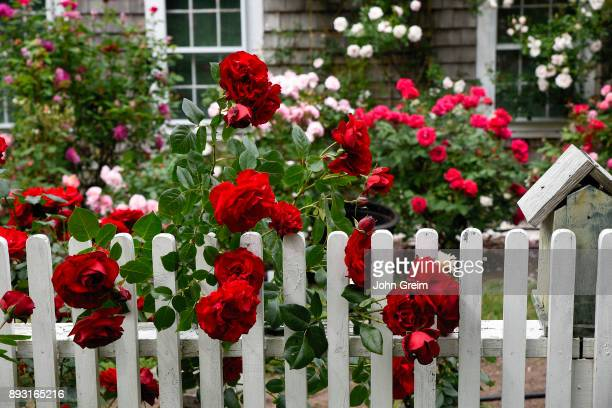 Charming New England rose garden