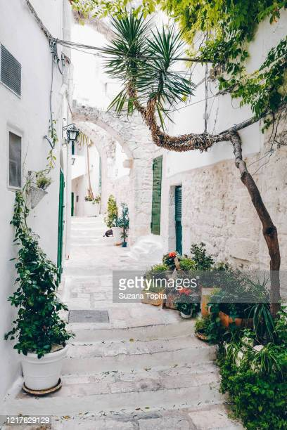 charming white alley with potted plants - ブリンディシ ストックフォトと画像