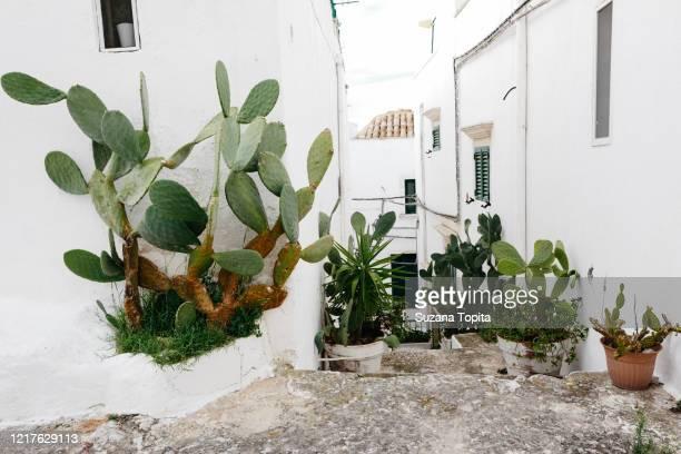 charming white alleys with decorative plants - ブリンディシ ストックフォトと画像