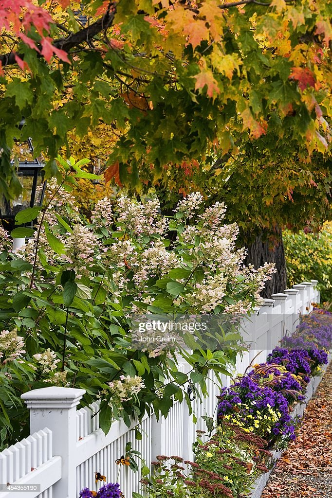 Charming white picket fence with colorful autumn trees and flowers charming white picket fence with colorful autumn trees and news photo mightylinksfo