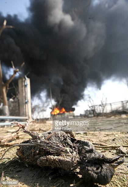 A charred body of a bird can be seen near the Indian Oil depot in Jaipur on Sunday November 1 2009