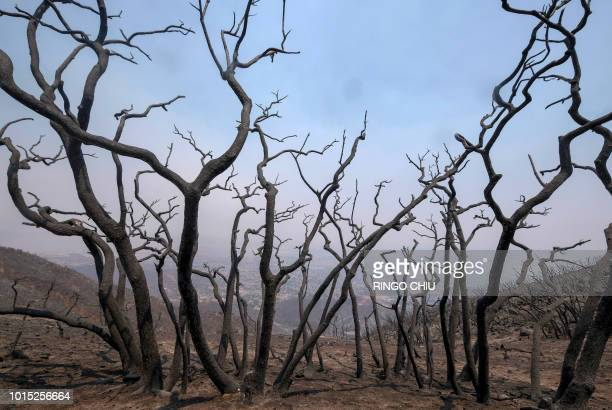 Charred trees remain on burned area at the Holy Fire in Lake Elsinore California southeast of Los Angeles on August 11 2018 The fire has burned 21473...