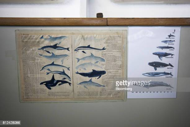 A chart informs crew members about local marine mammals including whales and dolphins aboard the Mafuta diamond mining vessel operated by Debmarine...