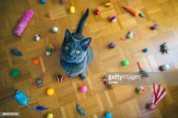 gato de chartreux sentada entre brinquedos - grupo mediano de animales - fotografias e filmes do acervo