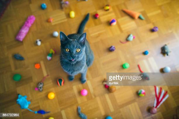 Chartreux Cat Tongue