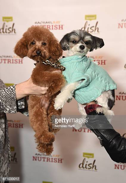 Chase and Tinkerbelle attend the celebration of the launch of Rachael Ray's Nutrish DISH with a Puppy Party on September 28, 2016 in New York City.