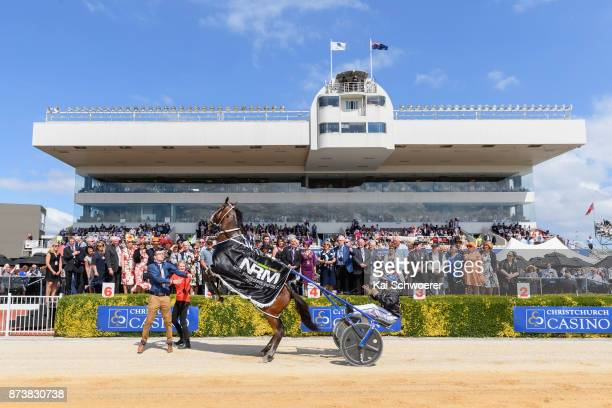 Chase Auckland is seen rearing while driver Natalie Rasmussen celebrates with owners after winning Race 7 NRM Sires Stakes Series No 34 Final during...