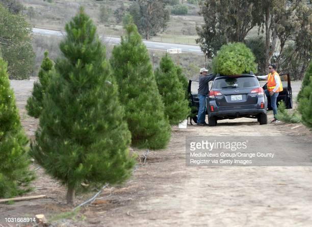Chase Peltzer, right, helps Alex Adam, of Laguna Niguel, tie a tree to his car at Peltzer Pines in Silverado on Friday. ///ADDITIONAL INFORMATION:...