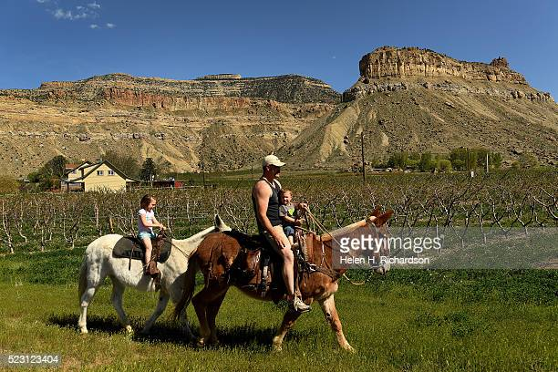 Chase Spaid enjoys the beautiful weather as he rides with his son Wylan on their mule Ben right and his daughter Melanie on her mule Babe in back...