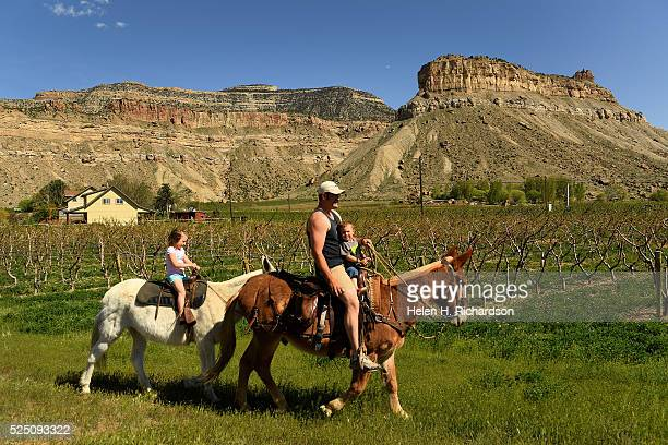 Chase Spaid enjoys the beautiful weather as he rides with his son Wylan on their mule Ben right and his daughter Delanie on her mule Babe in back...