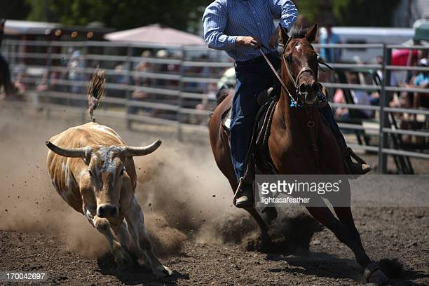 Chasing a Rodeo Steer - Dust Flying