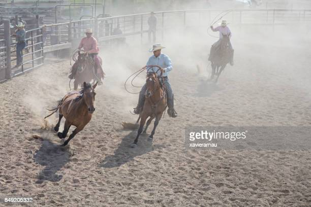 chasing horse in rodeo arena in utah, usa - equestrian eventing stock pictures, royalty-free photos & images