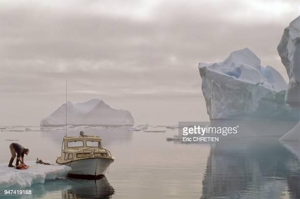 Chasseur groenlandais depecant un phoque sur une glace derivante Au large de Sermiligaq Region d'Ammassalik