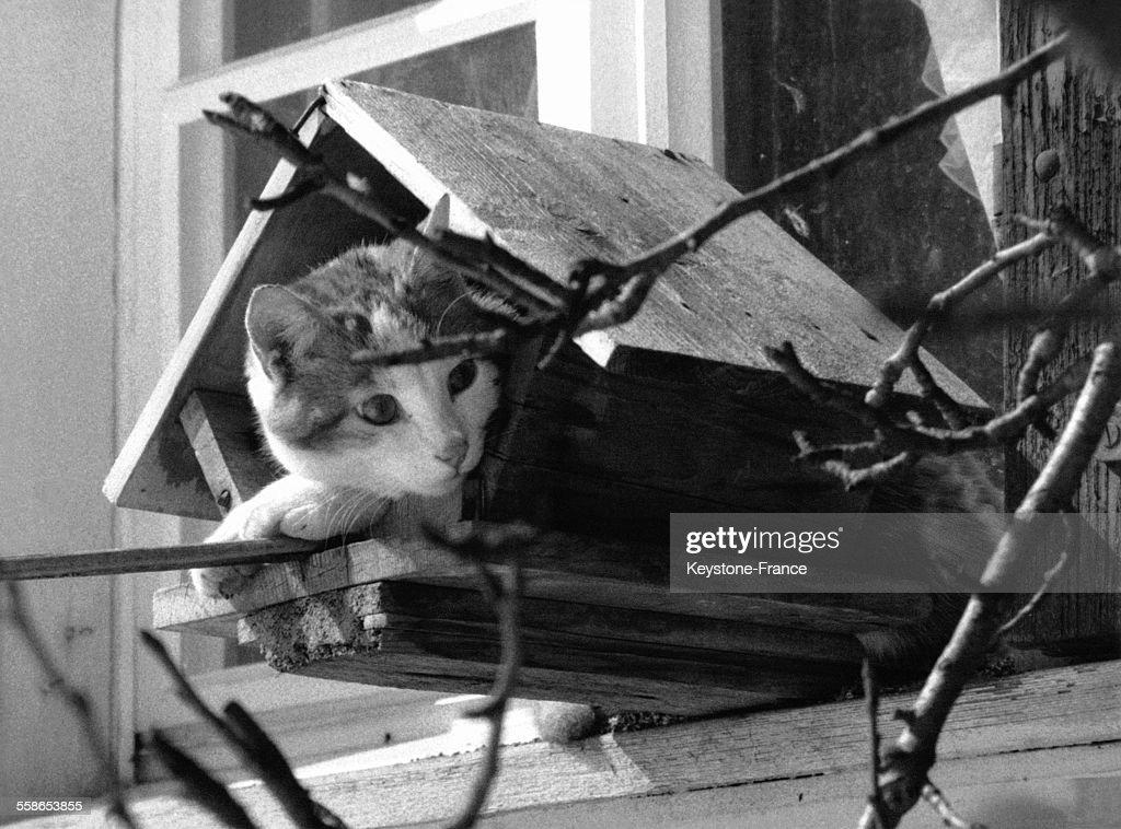 Chat dans une mangeoire à oiseaux : News Photo