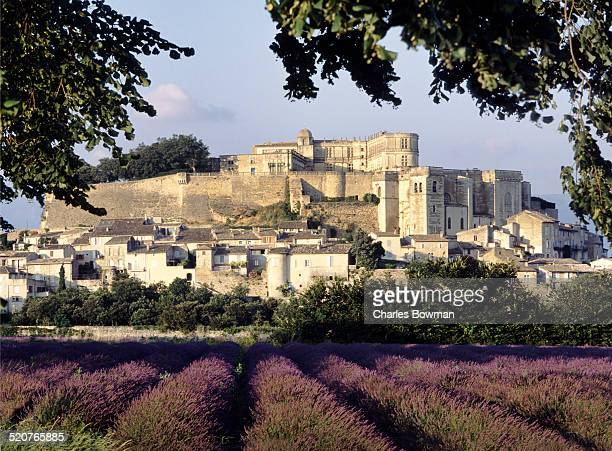 Chateau of Grignan stands behind rows of lavender