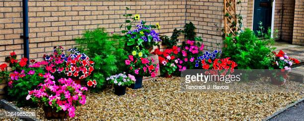chatteris in bloom - bavosi stock pictures, royalty-free photos & images