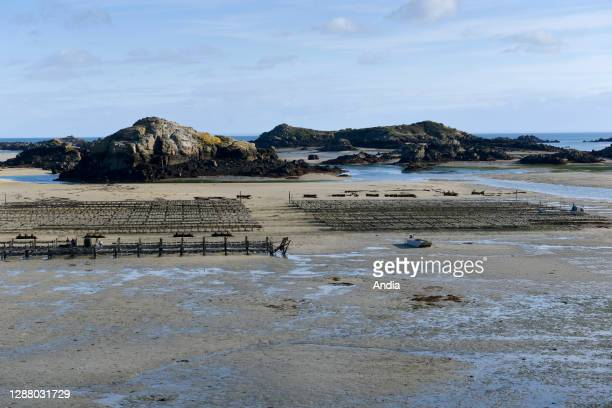 Chausey Islands oyster farm Lenoir Thomas organic oysters