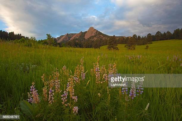 Chautauqua Park - Boulder, Colorado