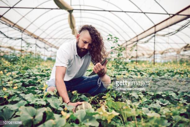 checking a plant quality in a greenhous - half shaved hairstyle stock pictures, royalty-free photos & images