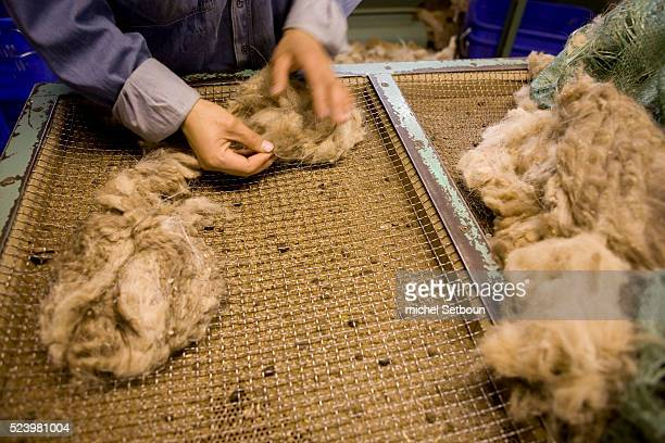 Checking and sorting raw cashmere at the Goyo Cashmere factory in Ulaanbaatar the largest cashmere factory in Mongolia