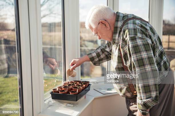 checking on his tomato plants - recreational pursuit stock pictures, royalty-free photos & images
