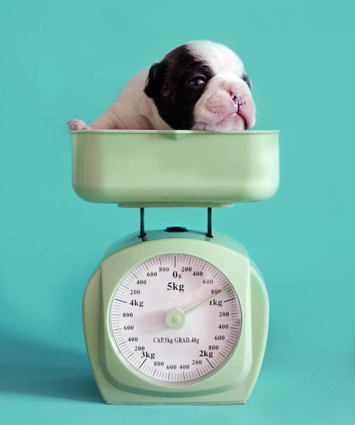 Checking Puppy Weight Wall Art
