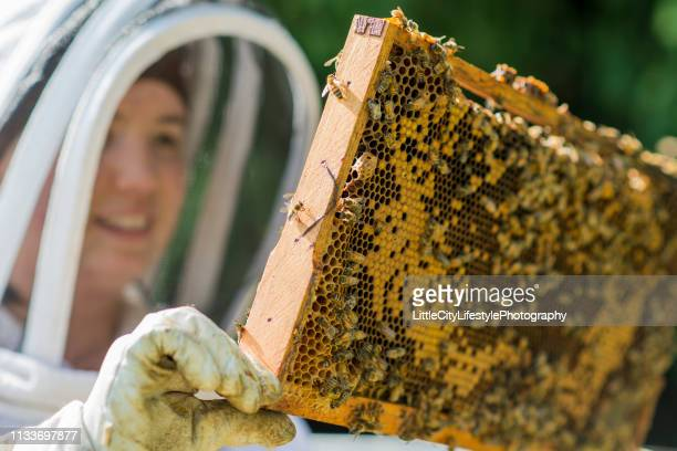 checking the beehive's progress - agricultural occupation stock pictures, royalty-free photos & images