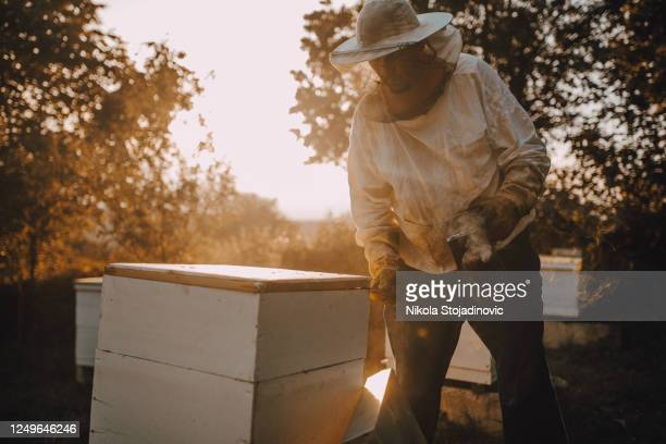checking the hives - flower part stock pictures, royalty-free photos & images