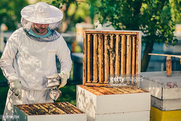 Checking the hives