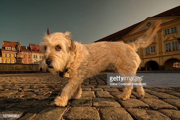 Cheeky dog in a Czech town square