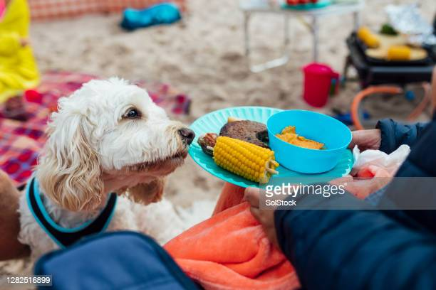 cheeky dog - funny bbq stock pictures, royalty-free photos & images