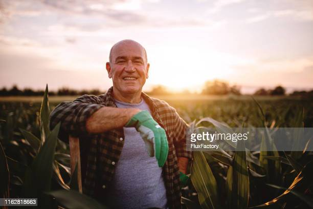 cheerful farmer in a corn field - farmer stock pictures, royalty-free photos & images