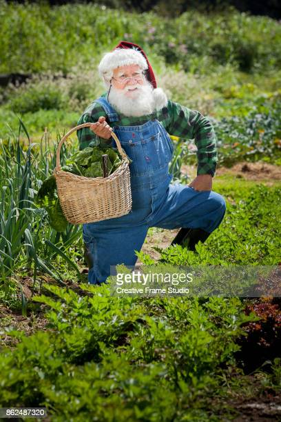 Cheerful Santa Claus gardening and harvesting holding up his wicker basket full of vegetables