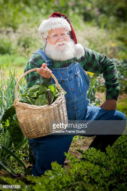 Cheerful Santa Claus gardening and harvesting holding up his wicker basket full