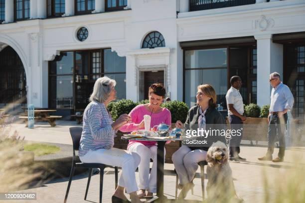 vrolijke hogere vrienden die van thee samen buiten koffie genieten - one animal stockfoto's en -beelden