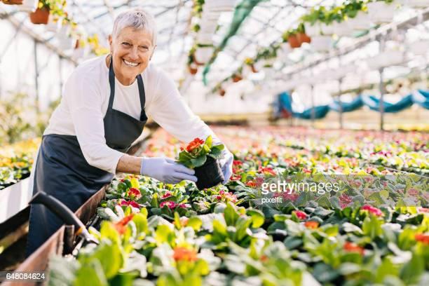 Vrolijke senior vrouw planten van bloemen