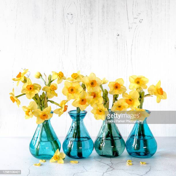 cheerful still-life images of spring yellow daffodils - narcissus in vibrant coloured little glass vases - bright colour stock pictures, royalty-free photos & images