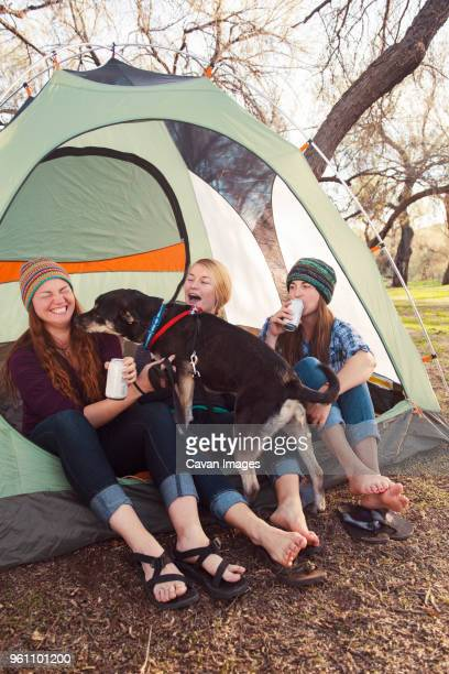 Cheerful women enjoying with dog at camp site
