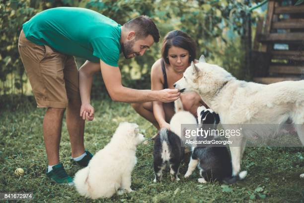Cheerful Young Couple Helping Mother Samoyed to Feed her Babies