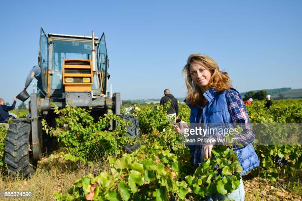cheerful young woman harvesting grapes in vineyard during wine harvest season autumn- Cepage Grenache, Chateauneuf du Pape, cotes du Rhone, France