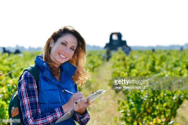 cheerful young woman oenologist wine specialist checking if grapes are ready to be harvested in vineyard during wine harvest season autumn- Cepage Grenache, Chateauneuf du Pape, cotes du Rhone, France