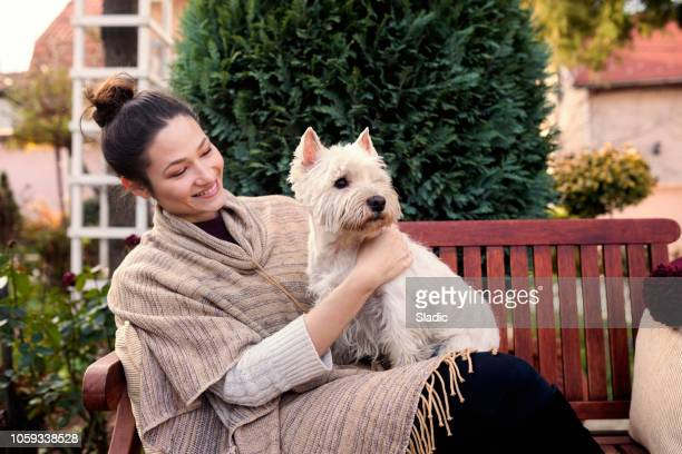 cheerful young woman with cute dog - west highland white terrier stock photos and pictures