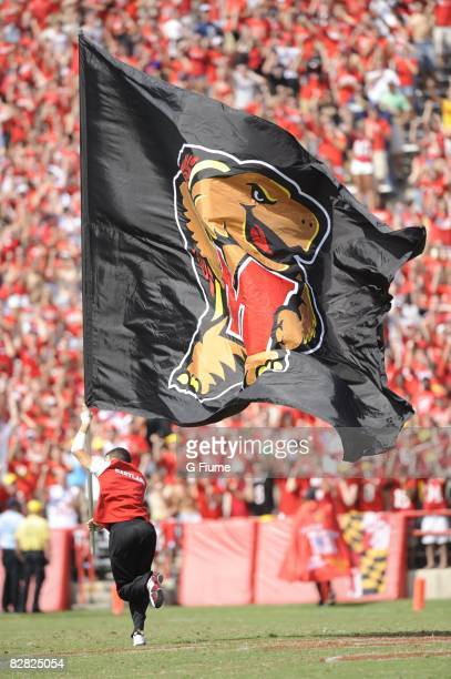 A cheerleader runs across the field with a Maryland Terrapin flag during the game between the Maryland Terrapins and the California Golden Bears on...