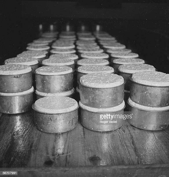 Cheese dairy of the Roquefort society at L'IleRousse Draining in moulds and ripening About 1955