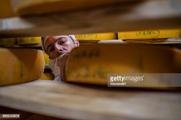 Cheese factory worker controlling maturation of cheese