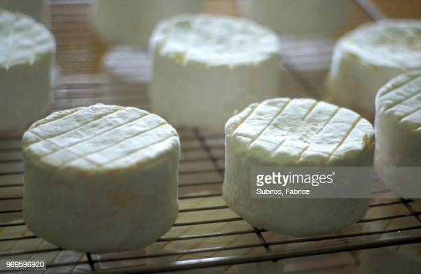 Cheese from Armanon