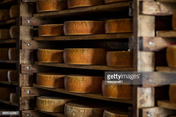 Cheese loafs maturing on shelves in cheese factory