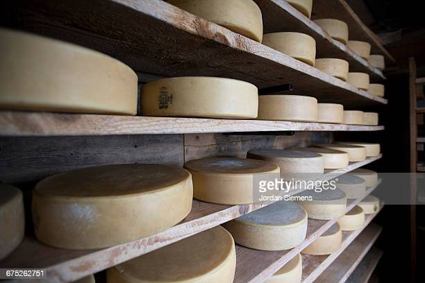 cheese resting on a shelf - チーズ ストックフォトと画像