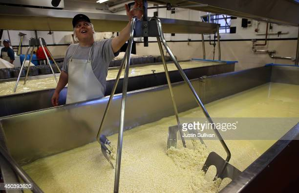 Cheesemaker Gabriel Luddy monitors a vat while making cheese at Vella Cheese on June 10 2014 in Sonoma California The Food and Drug Administration...