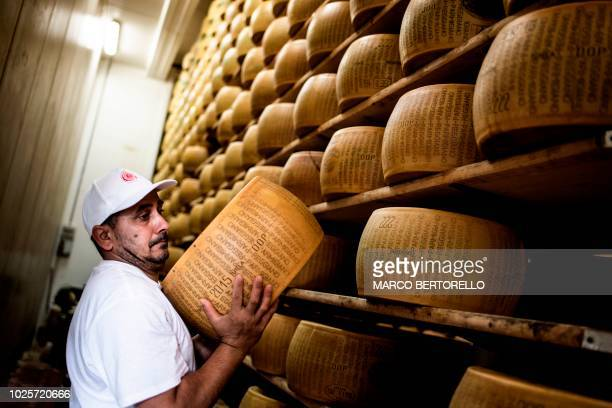 Cheesemaker Singh Taljit a member of the Indian Sikh community holds a Parmigiano cheese at a Parmigiano Reggiano factory in the Dall'Aglio Farm on...